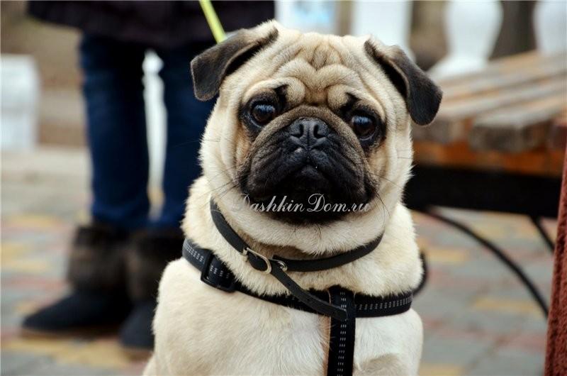как похудеть собаке после стерилизации